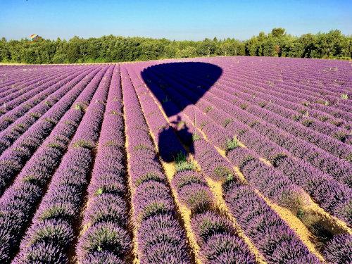 Montgolfière en Provence